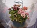 母の日の花鉢セットB