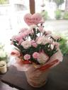 母の日・カーネーション鉢植えピンク