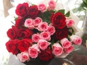 想いがあふれるピンクレッド系のバラの花束
