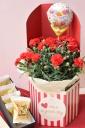 赤色カーネション鉢植えと黄身餡の銘菓 吹上のセット