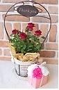 Thank you mom♪赤のミニバラとピンクソープフラワー