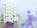 【お供え用】ホワイト胡蝶蘭3本立ち(大輪)