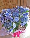 """ブルーの紫陽花""""コンペイトウ"""""""