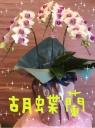 胡蝶蘭~ふわり~