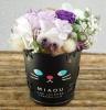 MIAOU・黒猫
