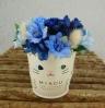 MIAOU☆白猫