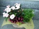 ニューギニアインパーチェンスと観葉の寄せ鉢