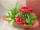 母の日に!大輪ガーベラと観葉植物の寄せ鉢