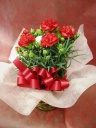 真っ赤なカーネーションの鉢植え
