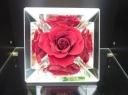 母の日 【薔薇 ~ミラーフレーム】RD