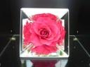 母の日 【薔薇 ~ミラーフレーム】PK