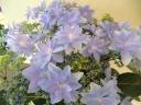 【紫陽花~ダンスパーティー】ブルー系