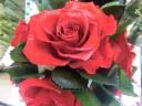 ☆Red Shine Rose☆