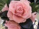 ☆Pink Shine Rose☆