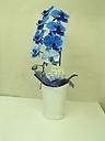 胡蝶蘭blue 1F