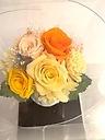 ブローノ yellow orange