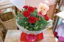 ★母の日 赤カーネ花鉢★わんちゃんピック付き