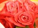 Clematis*薔薇ピンクロマン