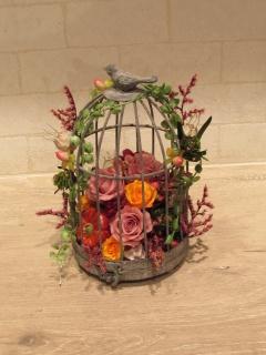 ピンク ロゼット(鳥の庭)
