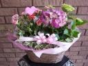 カーネーションとアジサイの母の日寄せ鉢