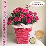 ピンクのカーネーション鉢&神戸風月堂ゴーフル