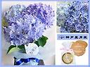 ◆万華鏡◆レアなあじさい&神戸風月堂ゴーフル