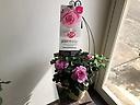 とても良い香りのバラ