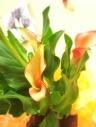 母の日*カラー「メルセデス」