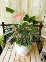 観葉植物寄せ植え 丸形