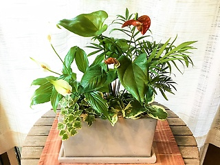 観葉植物寄せ植え*アンス&スパティフィラム*