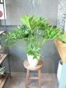 セローム 陶器鉢