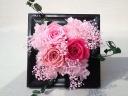 明るくも優しいピンク3色のバラ