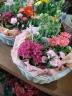 季節のお花カゴ