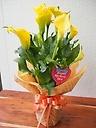 母の日☆カラー【イエロー】花鉢