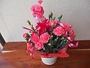 母の日☆カーネーション鉢【ピンク】