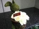 Moss Rabbit クリーム