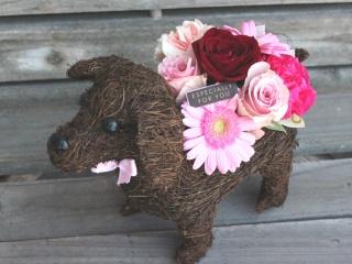 特別価格 Dog S  プラス  Pink