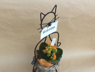 猫ちゃんR 花蜂 YO メッセージ
