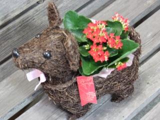 番犬くん2  赤 花鉢