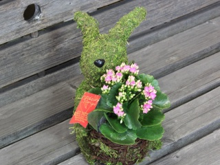 Plant Moss Rabbit Pink