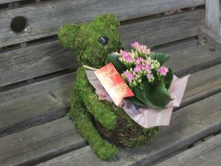 Plant Moss Bear  Pink