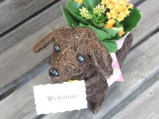 特別価格 Dog メッセージ plants YO