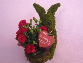Plant Moss Rabbit Red