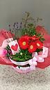 母の日に贈る寄せ鉢
