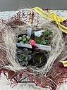多肉植物4個セット