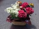 母の日!花鉢セット