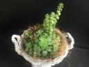 お洒落な多肉植物の寄せ植え