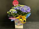 くるくるカワイイ紫陽花「カーリースパークル」