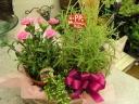 【母の日ギフト】季節花の鉢お任せセット♪