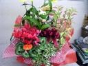 季節の花鉢おまかせセット